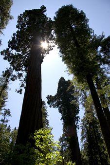 Free Trees Stock Photo - 20557230