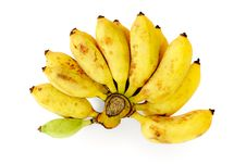 Free Bunch Of Bananas Isolated On White Background Stock Photography - 20559322