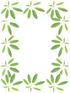 Free Tabebuia Leaves Stock Photo - 20559600