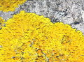 Free Yellow Moss On Old Tree Stock Photography - 20561832