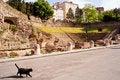 Free Cat, Roman Theater In Trieste Stock Image - 20565411