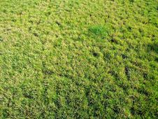 Free Lawn Of A Green Grass Royalty Free Stock Photography - 20562297