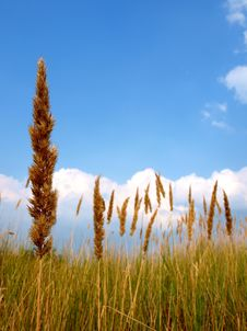 Free Steppe Grass Royalty Free Stock Photo - 20562335