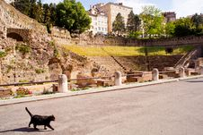 Free Cat, Roman Theater In Trieste Stock Image - 20565411