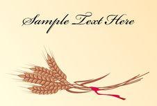Free Wheat Royalty Free Stock Photo - 20566325