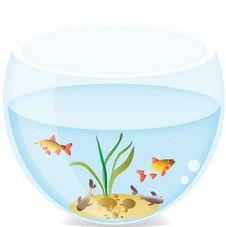 Free Small Fishes In A Round Aquarium Royalty Free Stock Photos - 20570108