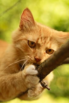 Free Cat In Nature Royalty Free Stock Photos - 20571808