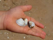Free Shells In Child S Hand Royalty Free Stock Photography - 20572337