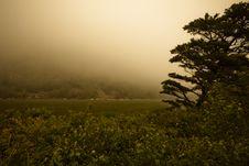 Free Fog Over Marsh Stock Images - 20572954