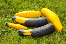 Free Courgette On The Grass Royalty Free Stock Photos - 20573958