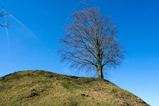 Solitary Lonely Tree On Grassy Hill Stock Image