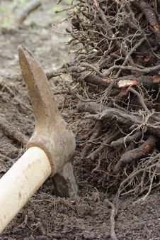 Free Pickaxe Used As Gardening Tool Stock Photo - 20575490