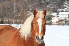 Free Horses Stock Photo - 20576030