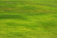 Free Green Grass Background Stock Photography - 20579952