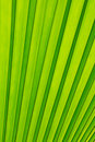 Free Green Palm Tree Leaf As A Background Stock Photo - 20587690