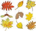Free Set Of Leaves Stock Images - 20588174