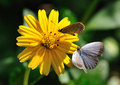 Free Chrysanthemum And Butterfly Royalty Free Stock Photos - 20589268