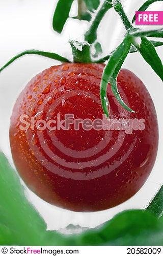 Free Tomato Royalty Free Stock Images - 20582009