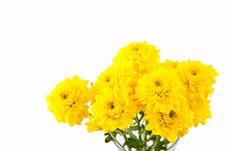 Free Yellow Chrysanthemum Flower Royalty Free Stock Photo - 20581625