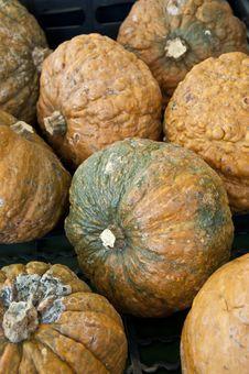 Free Pumpkins, Squash Stock Photos - 20581633