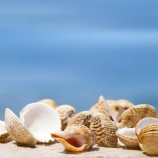Free Big Shell Stock Image - 20581861