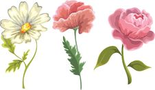 Free Flowers Isolated On White Background Stock Photography - 20582702