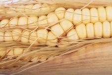 Free Corn Royalty Free Stock Photo - 20583245