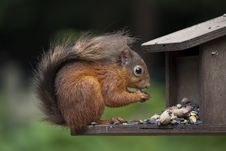 Free Squirrel Landscape Royalty Free Stock Image - 20583446