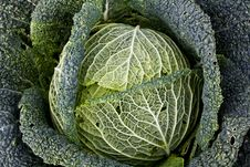 Free Organic Savoy Cabbage Stock Photo - 20583660