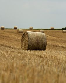 Free Bundle Of Straw With Blue Sky Royalty Free Stock Photo - 20583935