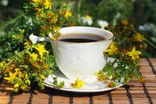 Free Herb Tea Time Stock Photography - 20584772