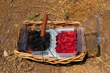 Raspberries And Blackberry In The Basket Royalty Free Stock Image