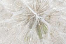 Free Dandelion Royalty Free Stock Photos - 20587358