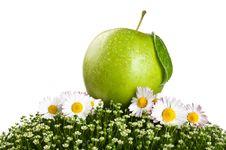 Fresh Apple On A Green Grass Stock Photos