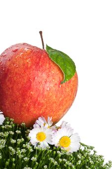 Fresh Apple On Green Grass Royalty Free Stock Photo