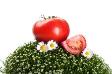 Fresh Tomato On A Green Grass Royalty Free Stock Photography