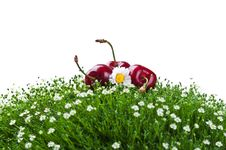 Free Fresh Cherry On A Green Grass Stock Image - 20587701