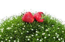 Free Fresh Strawberry On A Green Grass Stock Photos - 20587703