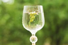 Free Glass Goblet Royalty Free Stock Photo - 20588385