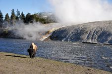 Free Bison Near Excelsior Geyser Stock Images - 20588584