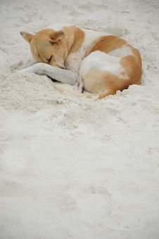 Free Sleeping Dog Royalty Free Stock Photos - 20589368