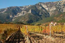 Free Grape Field Stock Image - 20589641