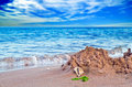 Free Shell On Seashore Royalty Free Stock Images - 20592119