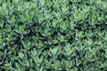 Free Plant Leaves Royalty Free Stock Images - 20592869