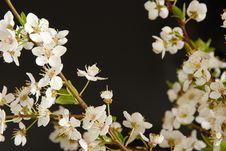 Free Spring Blossom Frame Stock Images - 20590064
