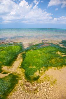 Free Green Seaweed Stock Photos - 20594083