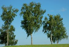 Free Trees On The Hill Stock Image - 20594971