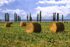 Free Straw Rolls In The Field Royalty Free Stock Photo - 20595045