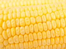 Free Maize Royalty Free Stock Photo - 20595185