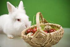Free White Bunny Stock Photos - 20595773